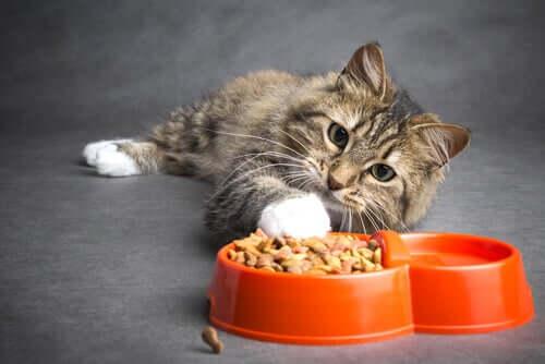 Wie ernährt man eine Katze mit Krebs? Wichtige Tipps!