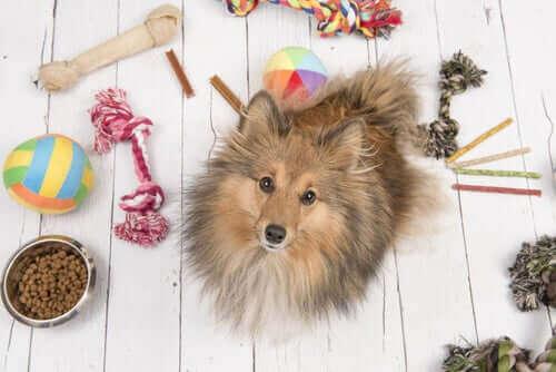Hunde während der Coronakrise beschäftigen: Einige Tipps