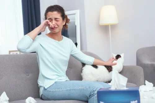 12 Tipps für Personen, die allergisch gegen Katzen sind