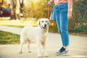 während der Coronakrise - Spaziergang mit Hund