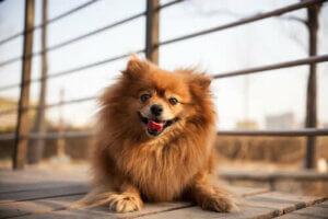 Hundeküsse - Hund