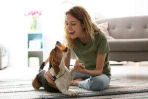 während der Coronakrise - Spielen mit Hund