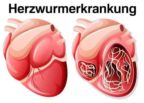 Insektenstiche - Herzwurmerkrankung