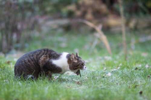 Akutes Erbrechen bei Katzen: Ursachen und Lösungen