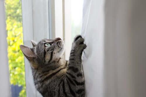 Woher kommt die Flexibilität und Beweglichkeit von Katzen?