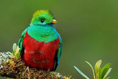 Der legendäre mesoamerikanische Quetzal