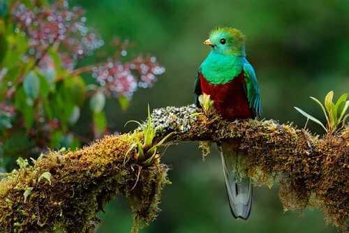 Der legendäre Quetzal von Mesoamerika