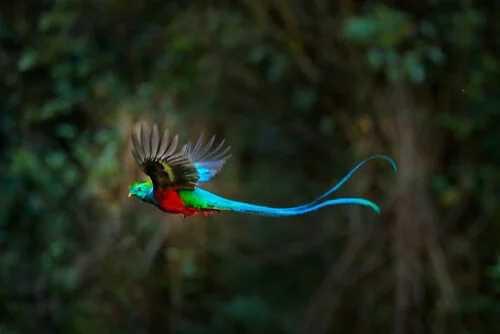Der legendäre Quetzal