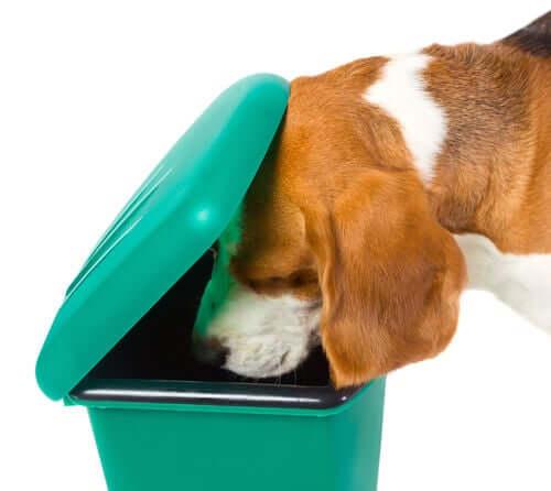 Fellnase durchsucht den Müll