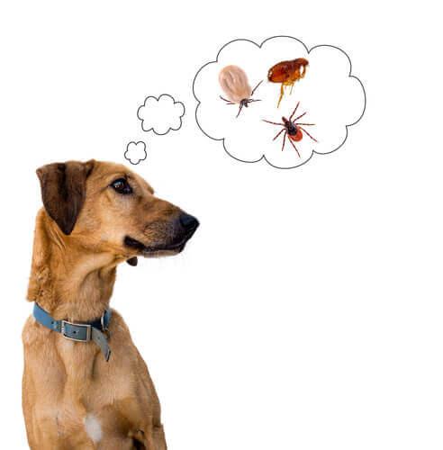 Hund denkt an Parasiten