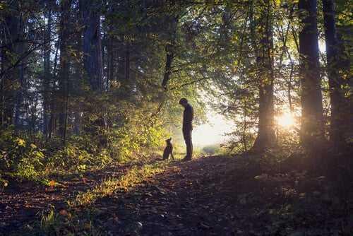 Hund und Mann im Wald