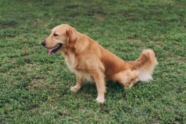 Nierenerkrankung bei Hunden: Wichtige Ernährungstipps
