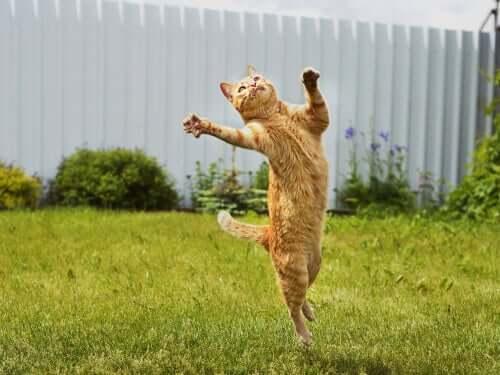 Katze springt in die Luft