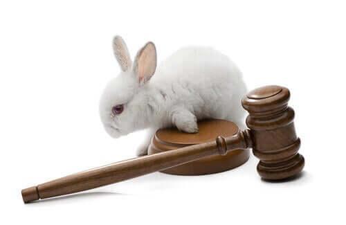 Tierrechte