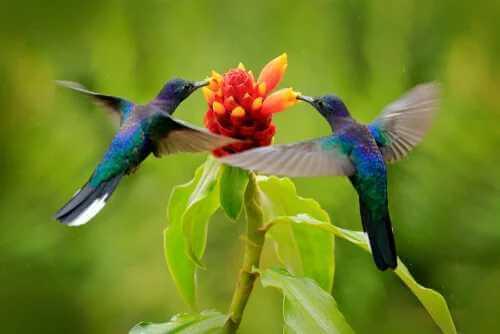 Zeitwahrnehmung bei Kolibris