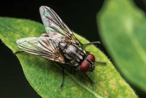 Zeitwahrnehmung einer Fliege