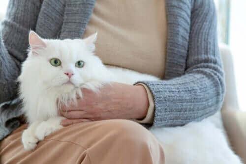 Ältere Katzen: Wie verändert sich ihr Verhalten?