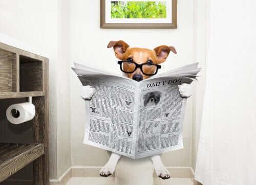 Durchfall bei Hunden und wie du ihn behandeln kannst