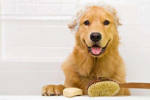 Solltest du dein Haustier während der Quarantäne häufiger baden?