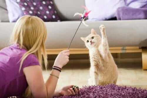 So kannst du deine Haustiere während der Quarantäne beschäftigen