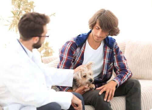 Hyperparathyreoidismus bei Hunden: Welche Auswirkungen hat diese Erkrankung?