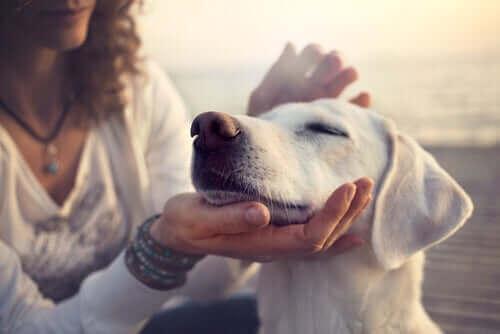 Wissenschaftliche Studien bestätigen die besonderen Fähigkeiten von Hunden