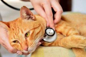 Veterinärmedizinische Notfälle - Katze