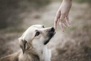 wissenschaftliche Studien - Hund riecht an einer Hand