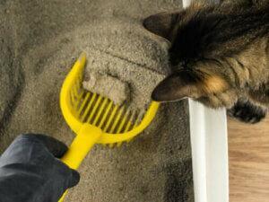 ältere Katzen - Reinigung der Katzentoilette