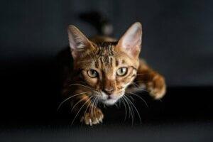Haustiere während der Quarantäne - Katze
