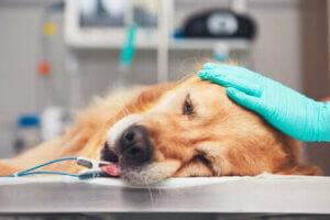 Veterinärmedizinische Notfälle - Hund