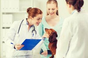 deutscher Schäferhund - Dackel beim Tierarzt