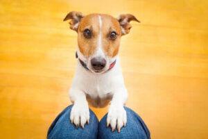 Haustiere während der Quarantäne - Hundetraining