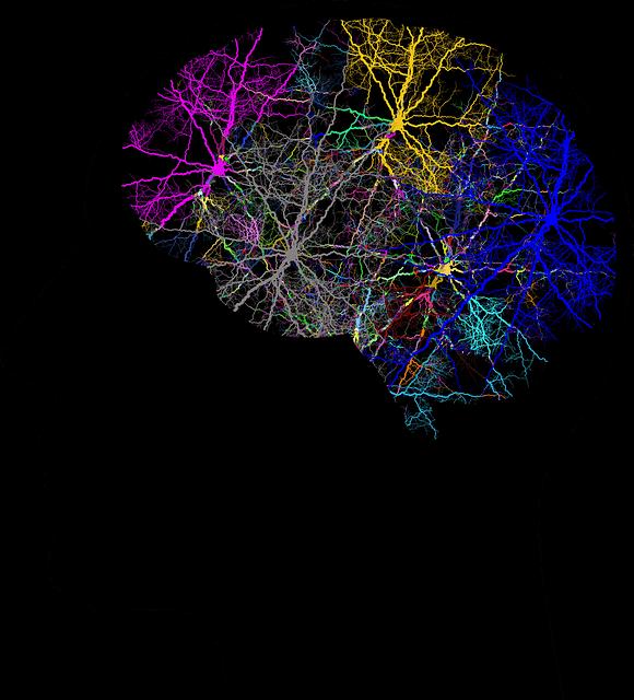Abbildung eines menschlichen Gehirns