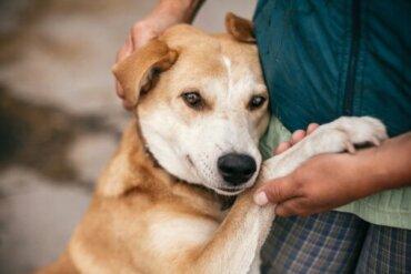 Adoption oder Kauf von Haustieren?