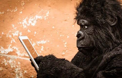 Affe und Handy
