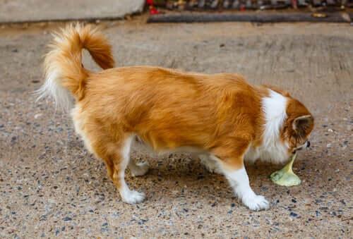 Erbrechen beim Hund: Arten, Ursachen und Konsistenz