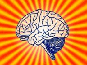 Womit beschäftigt sich die Psychobiologie?