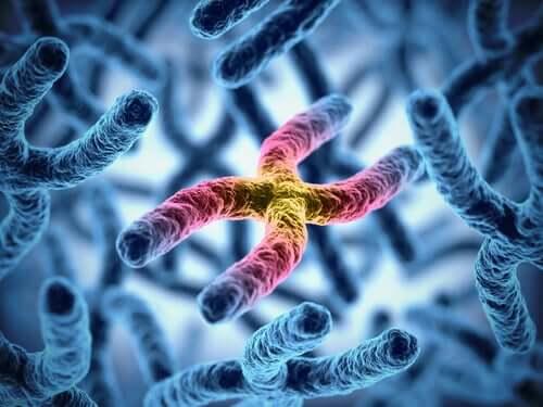 Abbildung von Chromosomen