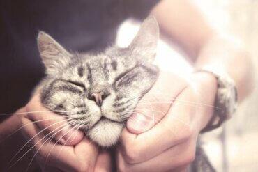 Welches sind die freundlichsten Katzenrassen?