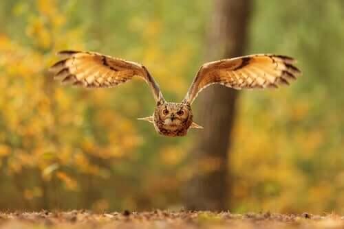 Nachtaktive Raubvögel: die Herrscher der Nacht