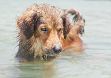 Ist Meerwasser schädlich für Hunde?