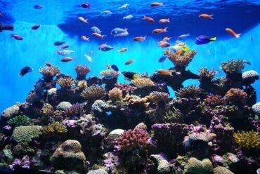 Womit beschäftigt sich die Ichthyologie?