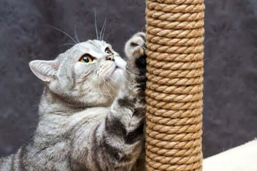 Katze an ihrem geliebten Kratzbaum