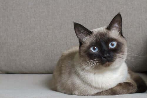 Katze blickt achtsam in die Kamera