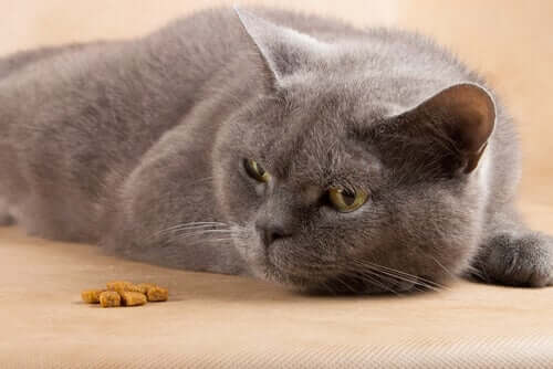 Katze will nicht fressen