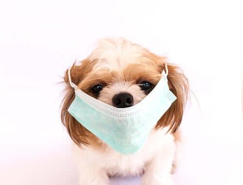 Die sechs ansteckendsten Krankheiten bei Hunden