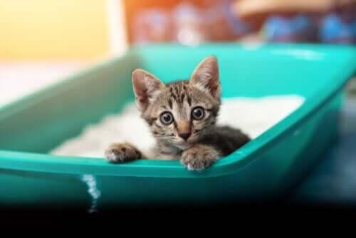 Durchfall bei Katzen: Ursachen und Symptome