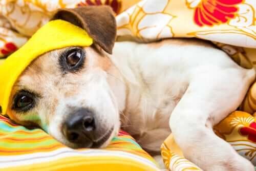 Schlafstörungen bei Hunden: Symptome und Ursachen