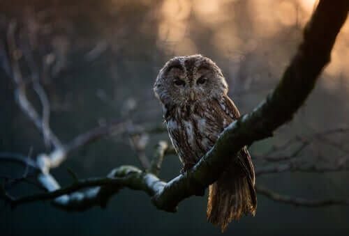 Steinkäuze sind ebenfalls nachtaktive Raubvögel